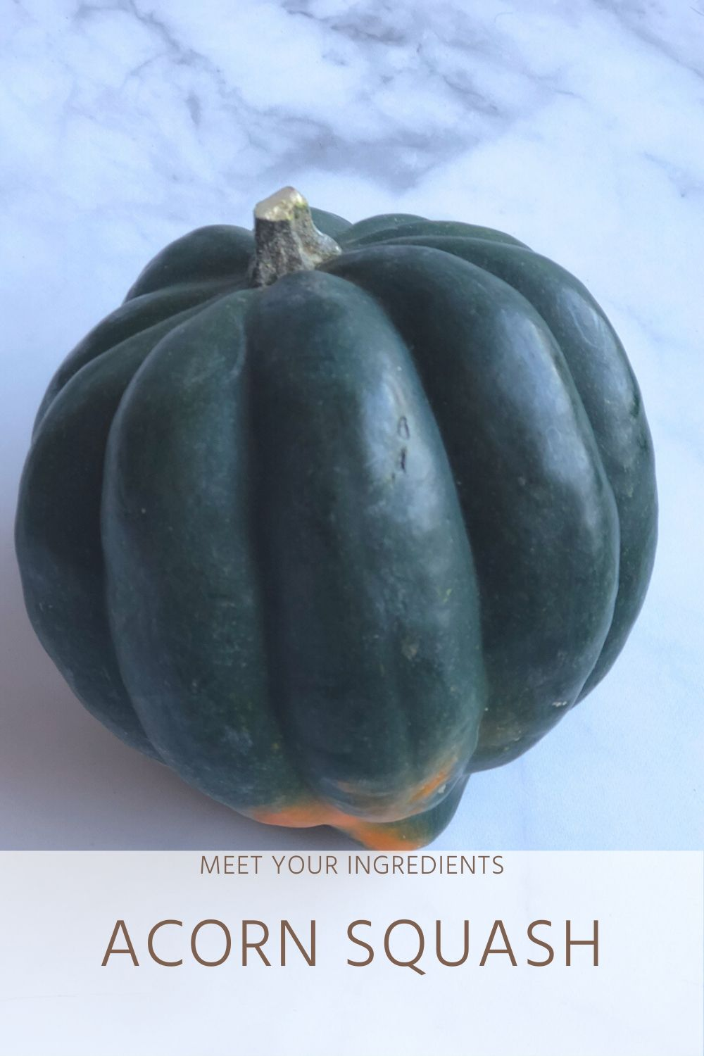 Meet Your Ingredients: Acorn Squash