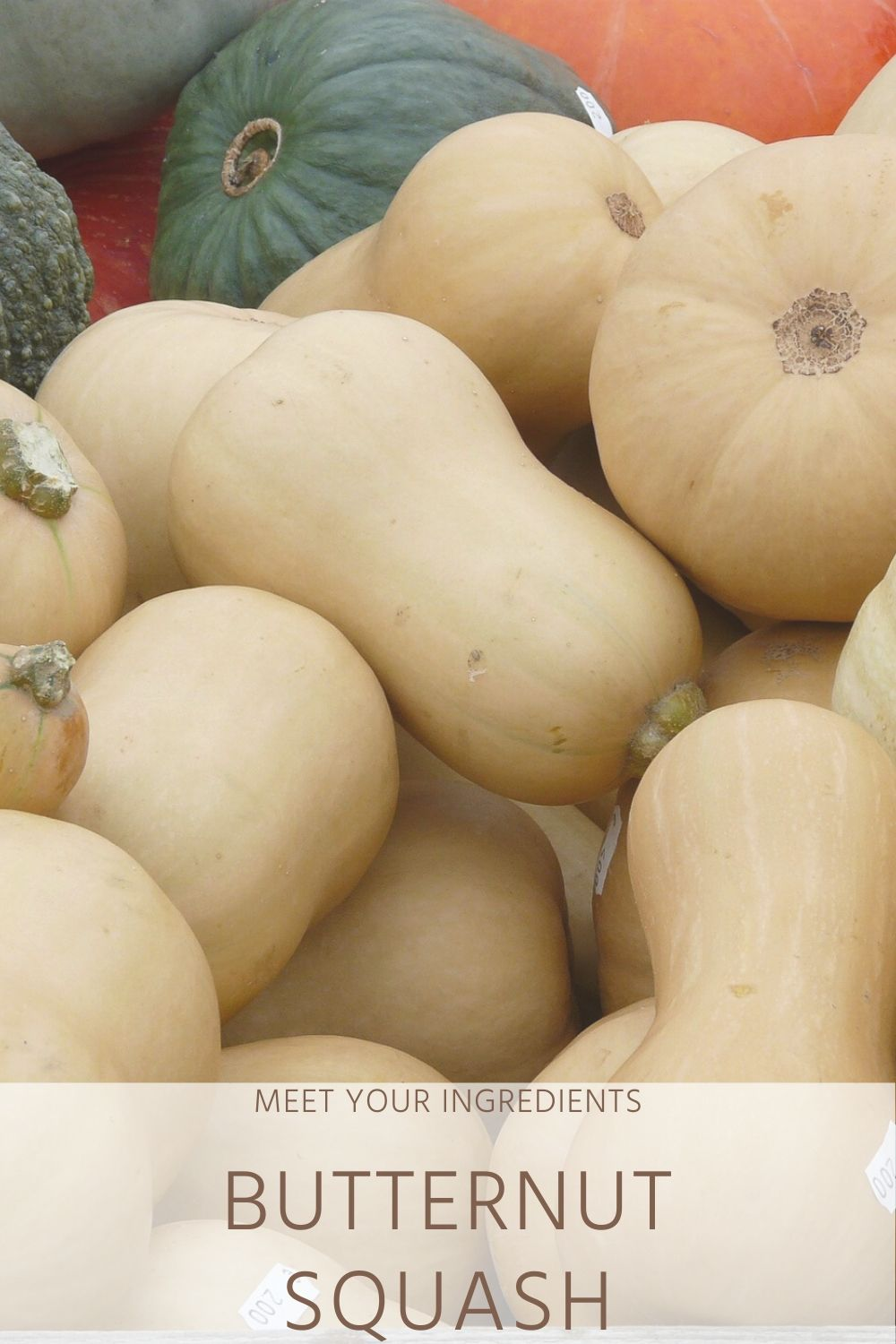 Meet Your Ingredients: Butternut Squash
